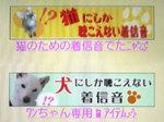03cats_&_dogs.jpg